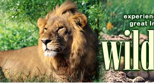 Wildlife in India, India wildlife tours